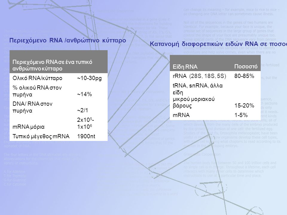 Περιεχόμενο RNA /ανθρώπινο κύτταρο Περιεχόμενο RNA σε ένα τυπικό ανθρώπινο κύτταρο Ολικό RNA/κύτταρο~10-30pg % ολικού RNA στον πυρήνα~14% DNA/ RNA στον πυρήνα~2/1 mRNA μόρια 2x10 5 - 1x10 6 Τυπικό μέγεθος mRNA1900nt Κατανομή διαφορετικών ειδών RNA σε ποσοστά Είδη RNAΠοσοστό rRNA (28S, 18S, 5S)80-85% tRNA, snRNA, άλλα είδη μικρού μοριακού βάρους15-20% mRNA1-5%