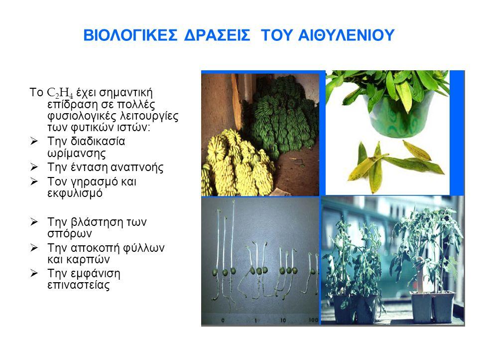 ΒΙΟΣΥΝΘΕΣΗ ΤΟΥ ΑΙΘΥΛΕΝΙΟΥ ΑΠΟ ΤΟΥΣ ΦΥΤΙΚΟΥΣ ΙΣΤΟΥΣ Το C 2 H 4 στους φυτικούς ιστούς παράγεται από την μεθειονίνη (αμινοξύ) με την βοήθεια ενζύμων.
