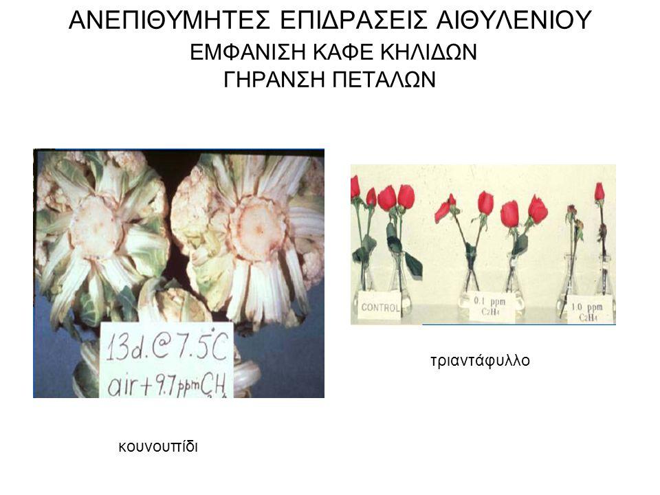 ΑΝΕΠΙΘΥΜΗΤΕΣ ΕΠΙΔΡΑΣΕΙΣ ΑΙΘΥΛΕΝΙΟΥ ΕΜΦΑΝΙΣΗ ΚΑΦΕ ΚΗΛΙΔΩΝ ΓΗΡΑΝΣΗ ΠΕΤΑΛΩΝ κουνουπίδι τριαντάφυλλο