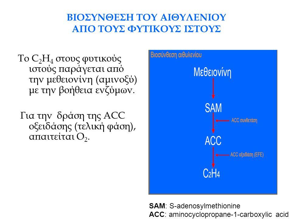 Παραγωγή αιθυλενίου σε σχέση με το στάδιο εξέλιξης του φυτικού ιστού Στους μη κλιμακτηρικούς καρπούς: Η ποσότητα C 2 H 4 που παράγεται παραμένει πρακτικά σταθερή σε όλα τα στάδια εξέλιξης τους Στους κλιμακτηρικούς καρπούς: Παράλληλα με την αύξηση της έντασης αναπνοής κατά το κλιμακτηρικό στάδιο, αυξάνεται σημαντικά και η ποσότητα του παραγόμενου C 2 H 4.