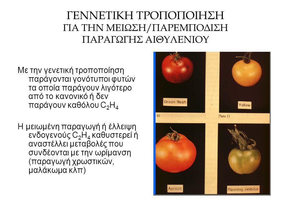 ΓΕΝΝΕΤΙΚΗ ΤΡΟΠΟΠΟΙΗΣΗ ΓΙΑ ΤΗΝ ΜΕΙΩΣΗ/ΠΑΡΕΜΠΟΔΙΣΗ ΠΑΡΑΓΩΓΗΣ ΑΙΘΥΛΕΝΙΟΥ Με την γενετική τροποποίηση παράγονται γονότυποι φυτών τα οποία παράγουν λιγότερ