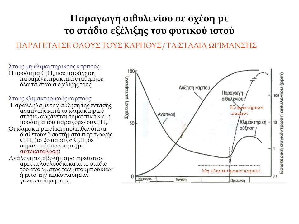 Παραγωγή αιθυλενίου σε σχέση με το στάδιο εξέλιξης του φυτικού ιστού Στους μη κλιμακτηρικούς καρπούς: Η ποσότητα C 2 H 4 που παράγεται παραμένει πρακτ