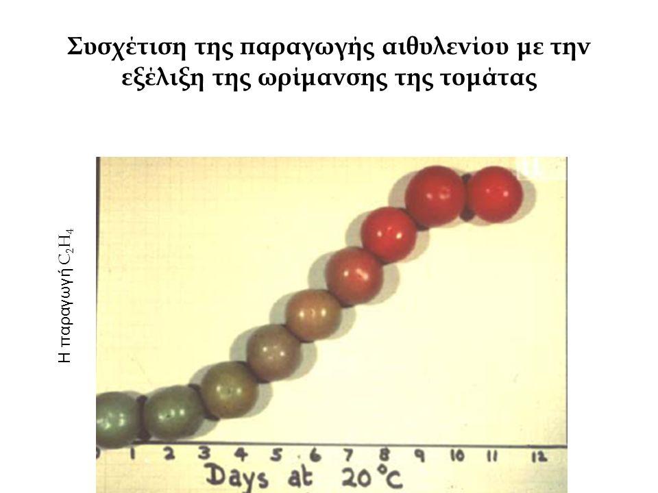 ΑΙΘΥΛΕΝΙΟ ΚΑΙ ΩΡΙΜΑΝΣΗ Τα φρούτα που ωριμάζουν παράγουν C 2 H 4 σε ποσότητα αρκετή για την ωρίμανσή τους (σε κανονικές συνθήκες) Η εξωτερική εφαρμογή C 2 H 4 επιταχύνει & εξασφαλίσει ομοιόμορφη ωρίμανση Στους μη κλιμακτηρικούς καρπούς δεν προκαλεί την αύξηση της παραγωγής ενδογενούς C 2 H 4 Στους κλιμακτηρικούς καρπούς προκαλεί την αύξηση της παραγωγής ενδογενούς C 2 H 4 συντομεύει το διάστημα που χρειάζεται ο καρπός για να μπει στην κλιμακτηρική περίοδο: η συντόμευση είναι μεγαλύτερη προς το τέλος της προκλιμακτηρικής περιόδου (πολύ άγουρους καρπούς δεν έχει επίδραση)