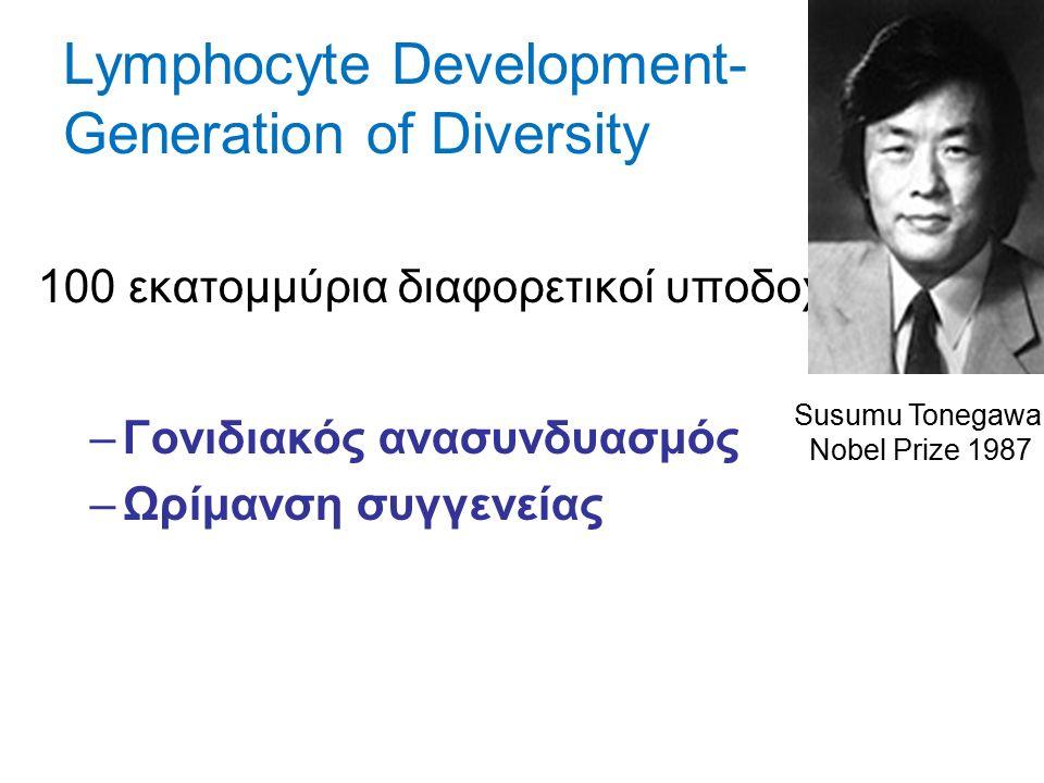 Lymphocyte Development- Generation of Diversity 100 εκατομμύρια διαφορετικοί υποδοχείς –Γονιδιακός ανασυνδυασμός –Ωρίμανση συγγενείας Susumu Tonegawa Nobel Prize 1987