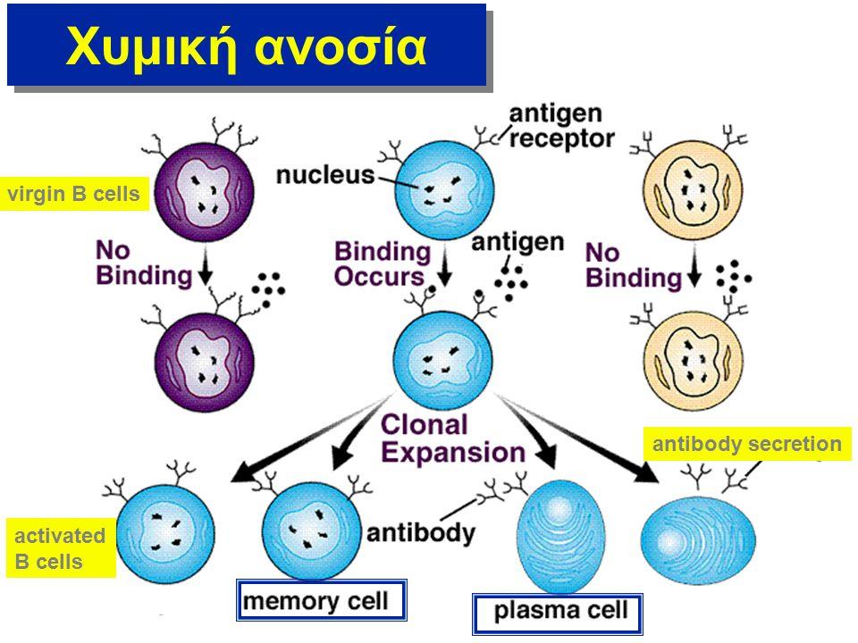 Κυτταρική ανοσία Τα T λεμφοκύτταρα έχουν ειδικούς υποδοχείς στην επιφάνειά τους (TCR) Ο TCR ΔΕΝ ΜΠΟΡΕΙ να προσδέσει ελεύθερο ανριγόνο.