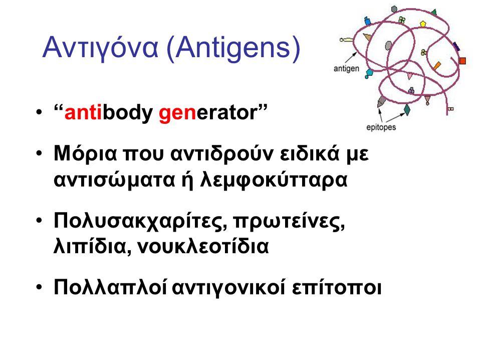 Αντιγόνα (Antigens) antibody generator Μόρια που αντιδρούν ειδικά με αντισώματα ή λεμφοκύτταρα Πολυσακχαρίτες, πρωτείνες, λιπίδια, νουκλεοτίδια Πολλαπλοί αντιγονικοί επίτοποι