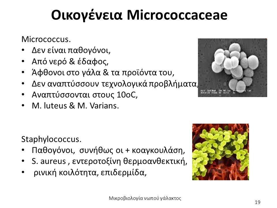 Οικογένεια Micrococcaceae Micrococcus. Δεν είναι παθογόνοι, Από νερό & έδαφος, Άφθονοι στο γάλα & τα προϊόντα του, Δεν αναπτύσσουν τεχνολογικά προβλήμ