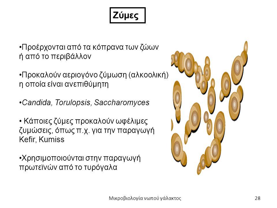 28 Ζύμες Προέρχονται από τα κόπρανα των ζώων ή από το περιβάλλον Προκαλούν αεριογόνο ζύμωση (αλκοολική) η οποία είναι ανεπιθύμητη Candida, Torulopsis,