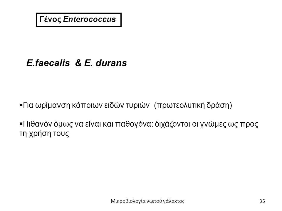 35 Γένος Enterococcus E.faecalis & E. durans  Για ωρίμανση κάποιων ειδών τυριών (πρωτεολυτική δράση)  Πιθανόν όμως να είναι και παθογόνα: διχάζονται