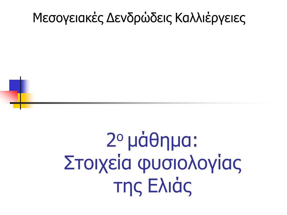 2 ο μάθημα: Στοιχεία φυσιολογίας της Ελιάς Μεσογειακές Δενδρώδεις Καλλιέργειες