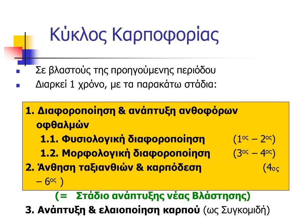 Κύκλος Καρποφορίας Σε βλαστούς της προηγούμενης περιόδου Διαρκεί 1 χρόνο, με τα παρακάτω στάδια: 1. Διαφοροποίηση & ανάπτυξη ανθοφόρων οφθαλμών 1.1. Φ