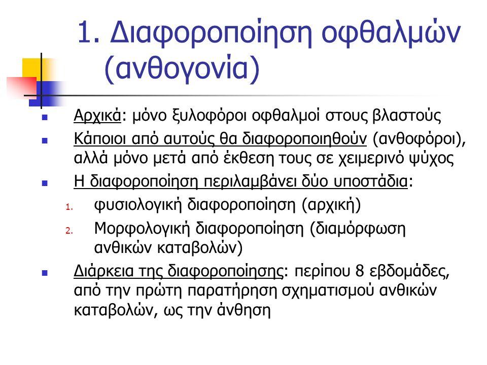 1. Διαφοροποίηση οφθαλμών (ανθογονία) Αρχικά: μόνο ξυλοφόροι οφθαλμοί στους βλαστούς Κάποιοι από αυτούς θα διαφοροποιηθούν (ανθοφόροι), αλλά μόνο μετά