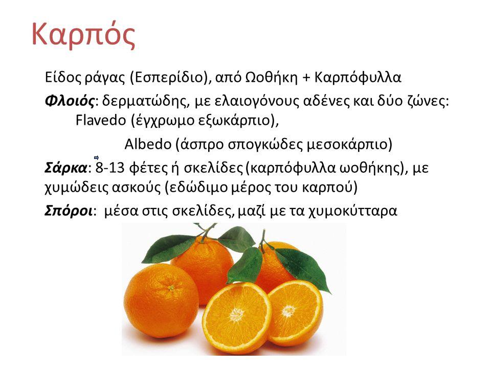 Είδος ράγας (Εσπερίδιο), από Ωοθήκη + Καρπόφυλλα Φλοιός: δερματώδης, με ελαιογόνους αδένες και δύο ζώνες: Flavedo (έγχρωμο εξωκάρπιο), Albedo (άσπρο σπογκώδες μεσοκάρπιο) Σάρκα: 8-13 φέτες ή σκελίδες (καρπόφυλλα ωοθήκης), με χυμώδεις ασκούς (εδώδιμο μέρος του καρπού) Σπόροι: μέσα στις σκελίδες, μαζί με τα χυμοκύτταρα Καρπός