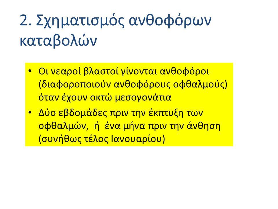 6) Σιτρουμέλλο: ΤΟ ΠΙΟ ΕΛΠΙΔΟΦΟΡΟ ΥΠΟΚΕΙΜΕΝΟ τρίφυλλη Πορτοκαλιά Χ Γκρέιπ φρουτ.