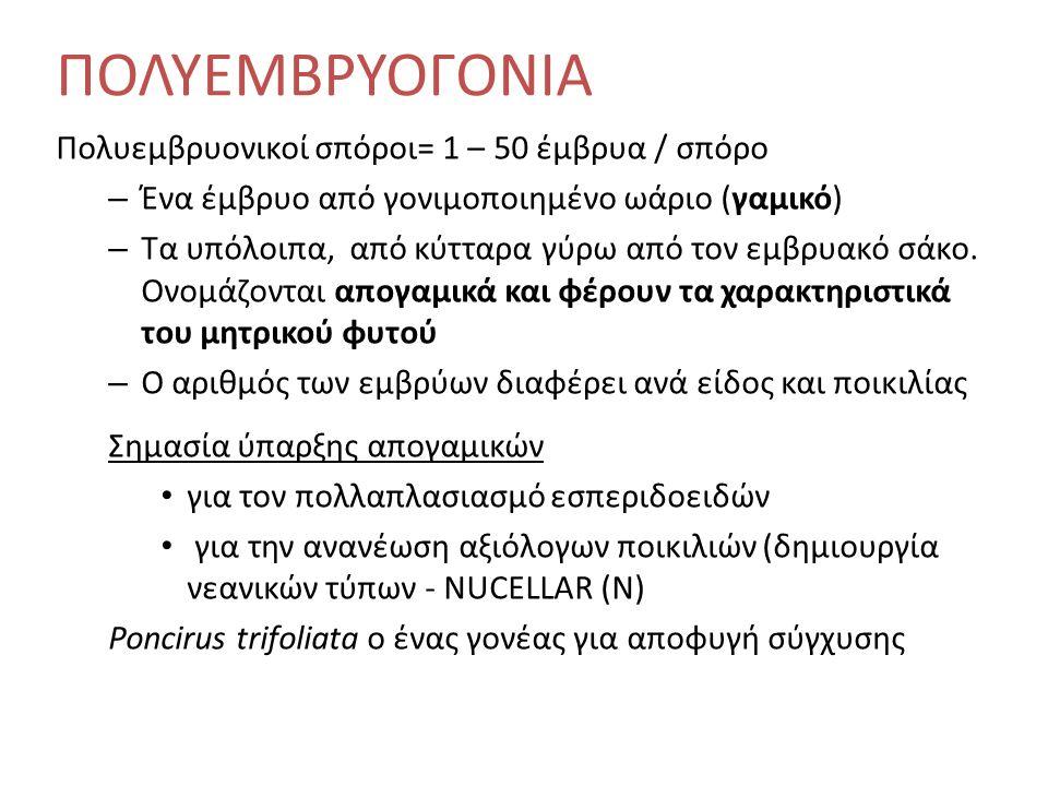 Πορτοκαλοειδή (Citrus sinensis) Υποκείμενα: Νεραντζιά: ανθεκτική σε Phytophthora, όχι σε Tristeza Τραχύκαρπη λεμονιά: υστερεί σε ποιότητα καρπών Μανταρινιά Cleopatra: ανθεκτική σε Tristeza Τρίφυλλη πορτοκαλιά: αντοχή σε ψύχος, εκλεκτής ποιότητας καρποί, αλλά παραλλάσσουν ως προς την ζωηρότητα, την παραγωγικότητα και τη μακροβιότητα.