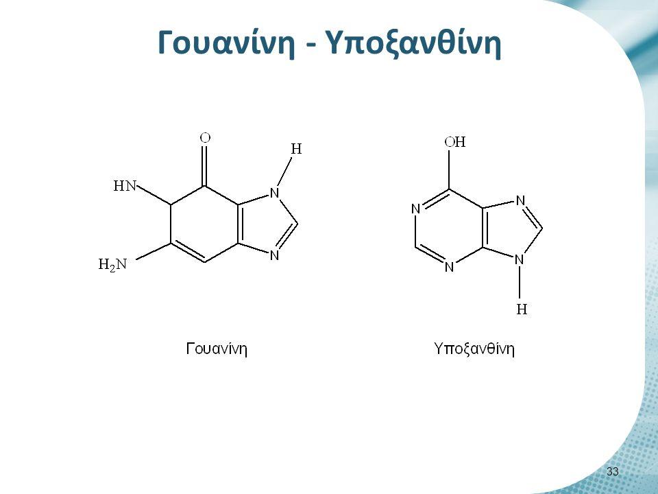 Γουανίνη - Υποξανθίνη 33