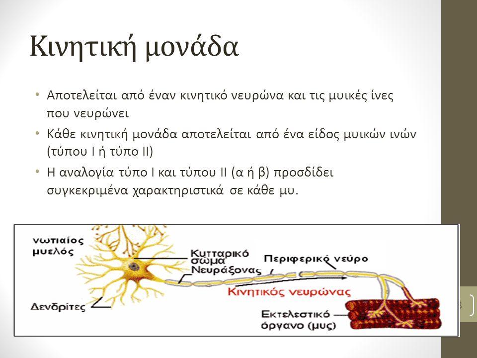 Κινητική μονάδα Αποτελείται από έναν κινητικό νευρώνα και τις μυικές ίνες που νευρώνει Κάθε κινητική μονάδα αποτελείται από ένα είδος μυικών ινών (τύπου Ι ή τύπο ΙΙ) Η αναλογία τύπο Ι και τύπου ΙΙ (α ή β) προσδίδει συγκεκριμένα χαρακτηριστικά σε κάθε μυ.