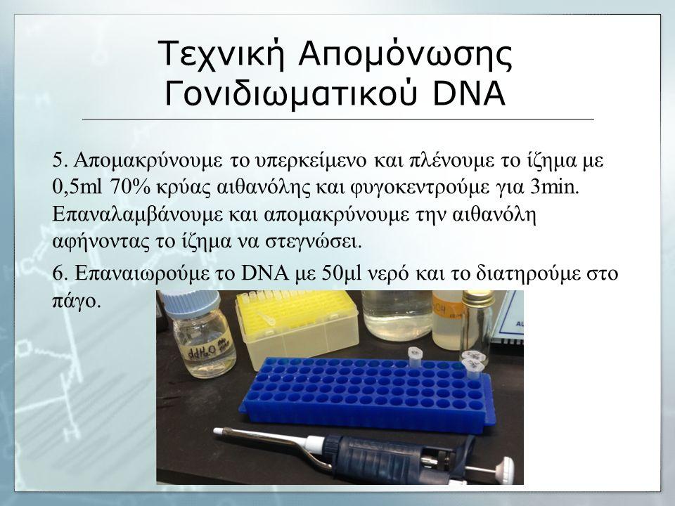 Τεχνική Απομόνωσης Γονιδιωματικού DNA 7.
