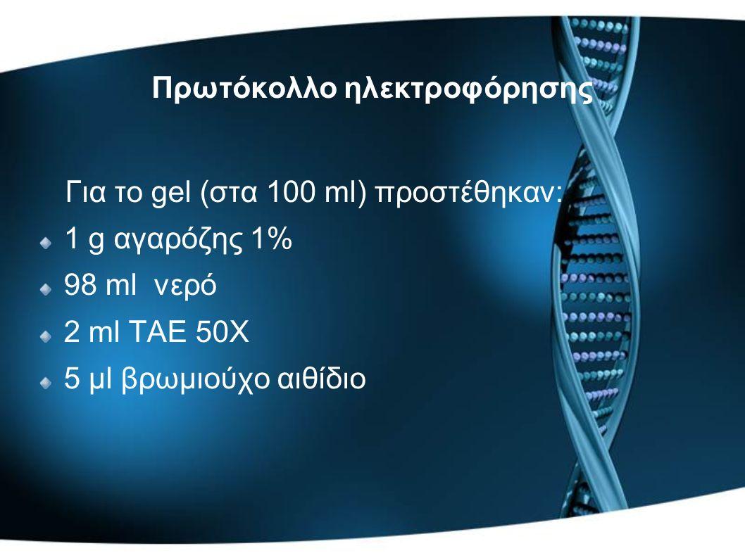 Για το gel (στα 100 ml) προστέθηκαν: 1 g αγαρόζης 1% 98 ml νερό 2 ml ΤΑΕ 50Χ 5 μl βρωμιούχο αιθίδιο Πρωτόκολλο ηλεκτροφόρησης