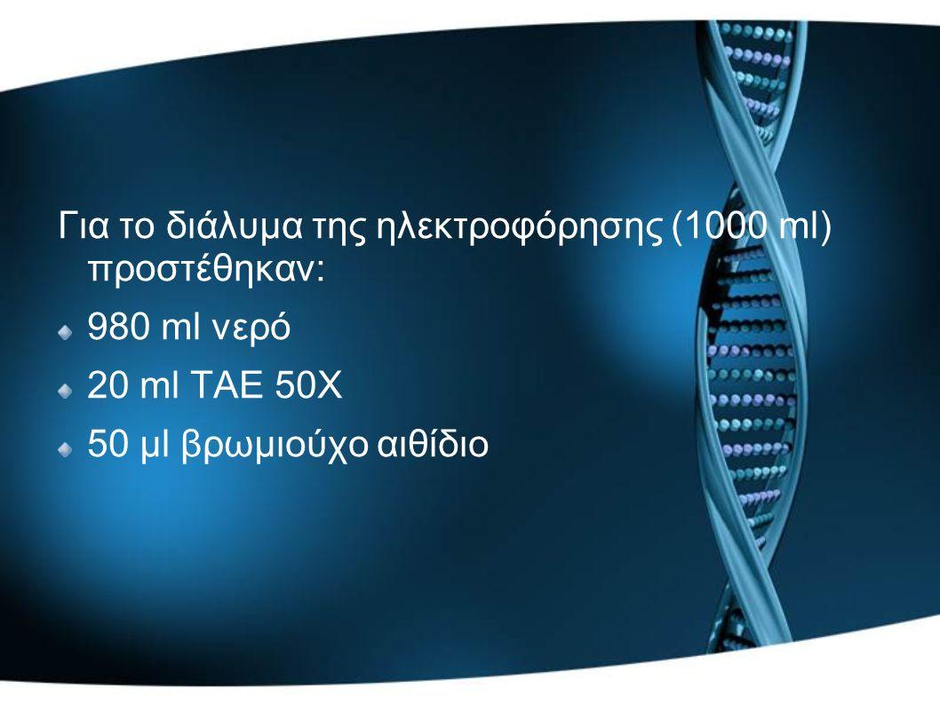 Για το διάλυμα της ηλεκτροφόρησης (1000 ml) προστέθηκαν: 980 ml νερό 20 ml ΤΑΕ 50Χ 50 μl βρωμιούχο αιθίδιο
