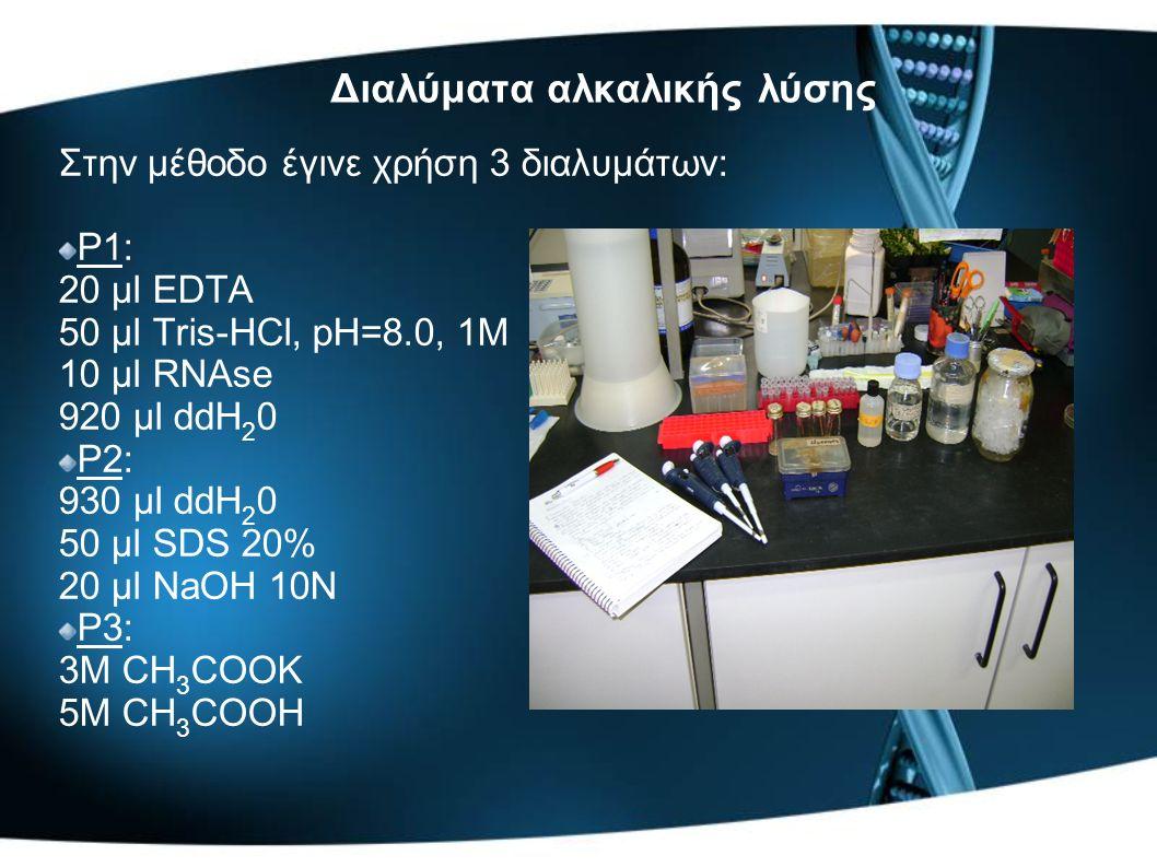 Διαλύματα αλκαλικής λύσης Στην μέθοδο έγινε χρήση 3 διαλυμάτων: P1: 20 μl EDTA 50 μl Tris-HCl, pH=8.0, 1M 10 μl RNAse 920 μl ddΗ 2 0 P2: 930 μl ddΗ 2 0 50 μl SDS 20% 20 μl NaOH 10N P3: 3M CH 3 COOK 5M CH 3 COOH