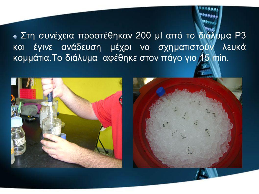 Στη συνέχεια προστέθηκαν 200 μl από το διάλυμα P3 και έγινε ανάδευση μέχρι να σχηματιστούν λευκά κομμάτια.Το διάλυμα αφέθηκε στον πάγο για 15 min.