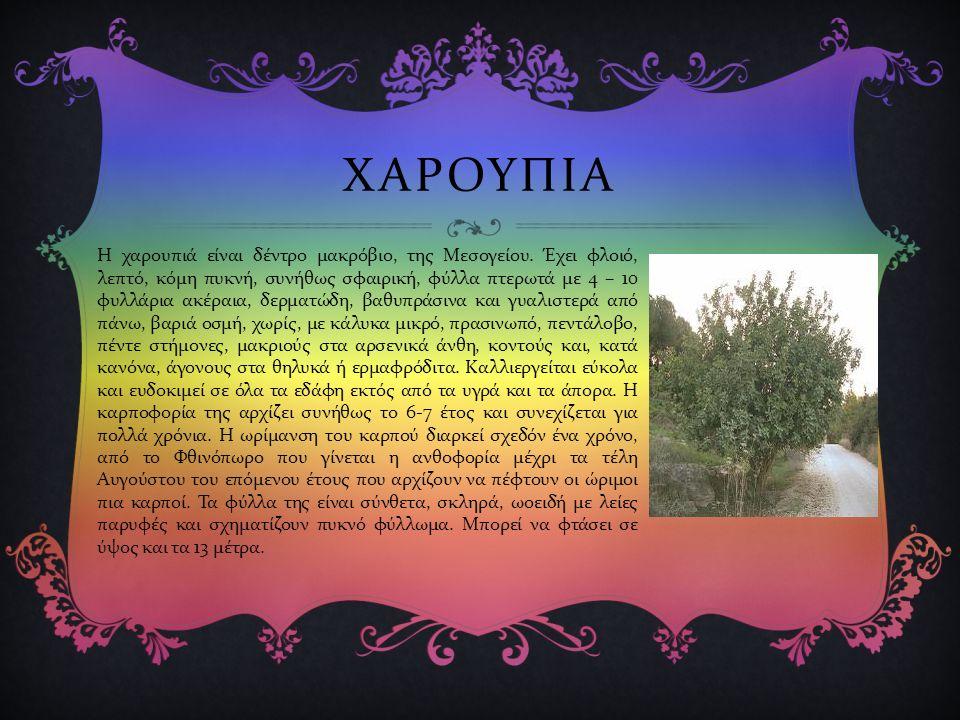 ΧΑΡΟΥΠΙΑ Η χαρουπιά είναι δέντρο μακρόβιο, της Μεσογείου.