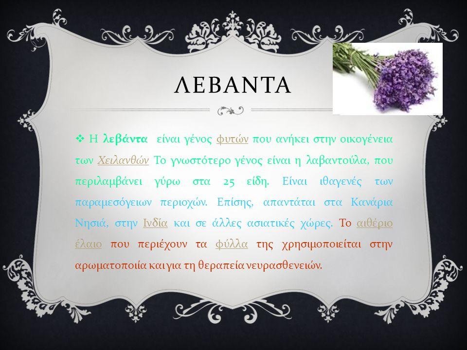 ΛΕΒΑΝΤΑ  Η λεβάντα είναι γένος φυτών που ανήκει στην οικογένεια των Χειλανθών Το γνωστότερο γένος είναι η λαβαντούλα, που περιλαμβάνει γύρω στα 25 είδη.