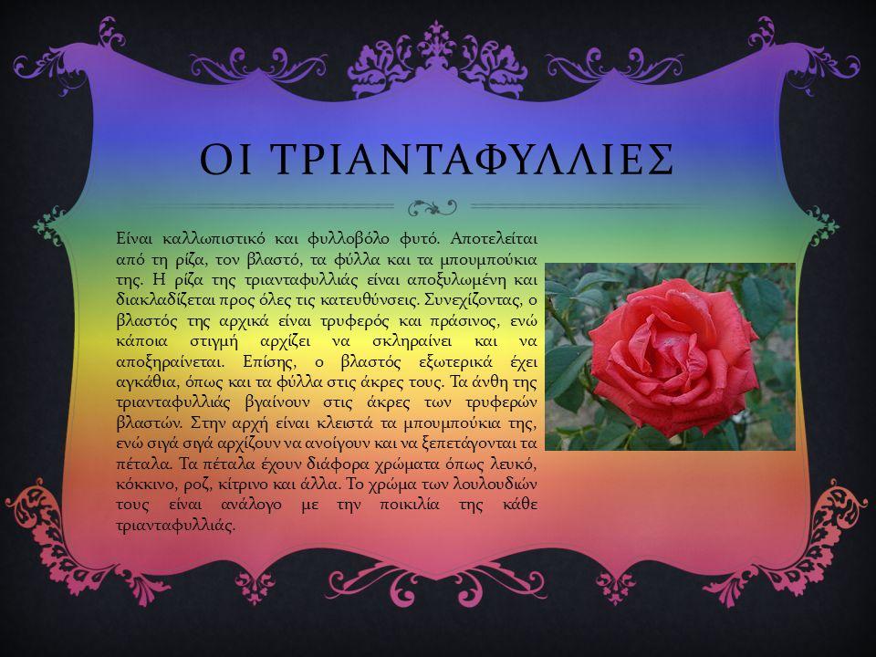 ΒΑΣΙΛΙΚΙΑ  Ο βασιλικός είναι αρωματικό ετήσιο, ποώδες φυτό της οικογένειας των Χειλανθών και της τάξης των σωληνανθών.
