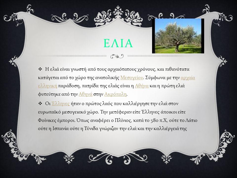 ΕΛΙΑ  Η ελιά είναι γνωστή από τους αρχαιότατους χρόνους, και πιθανότατα κατάγεται από το χώρο της ανατολικής Μεσογείου.