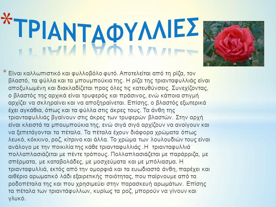 * Είναι καλλωπιστικό και φυλλοβόλο φυτό.