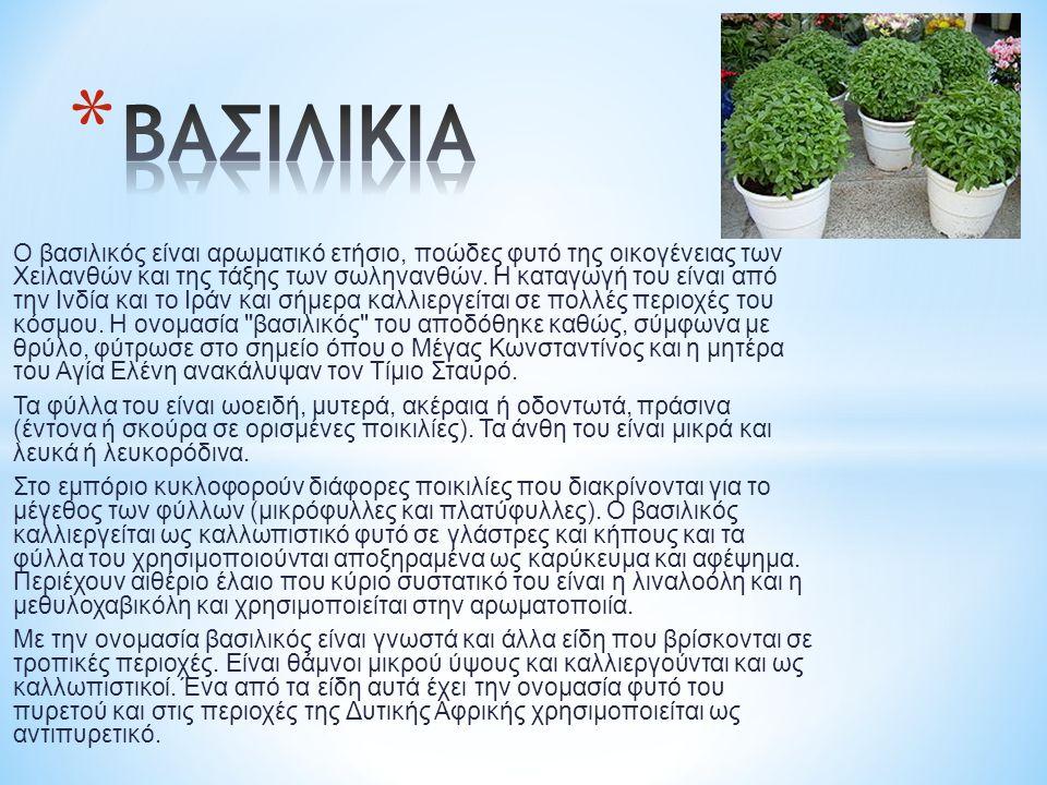 Ο βασιλικός είναι αρωματικό ετήσιο, ποώδες φυτό της οικογένειας των Χειλανθών και της τάξης των σωληνανθών.
