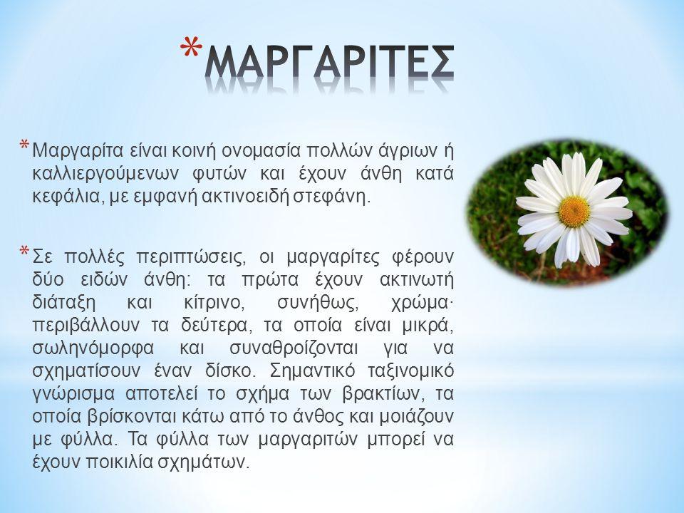 * Μαργαρίτα είναι κοινή ονομασία πολλών άγριων ή καλλιεργούμενων φυτών και έχουν άνθη κατά κεφάλια, με εμφανή ακτινοειδή στεφάνη.