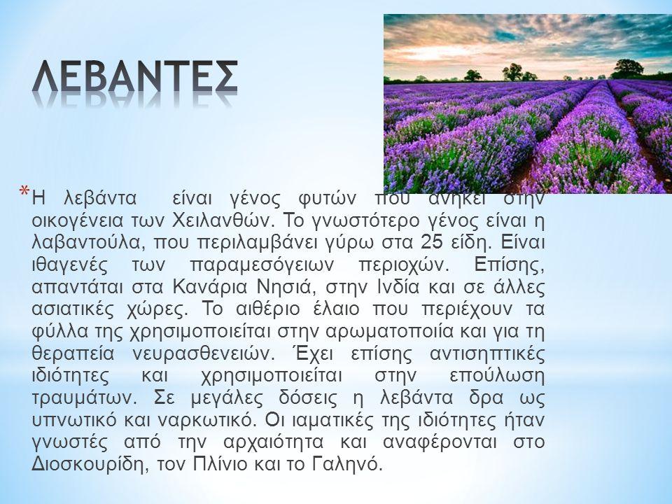* Η λεβάντα είναι γένος φυτών που ανήκει στην οικογένεια των Χειλανθών.