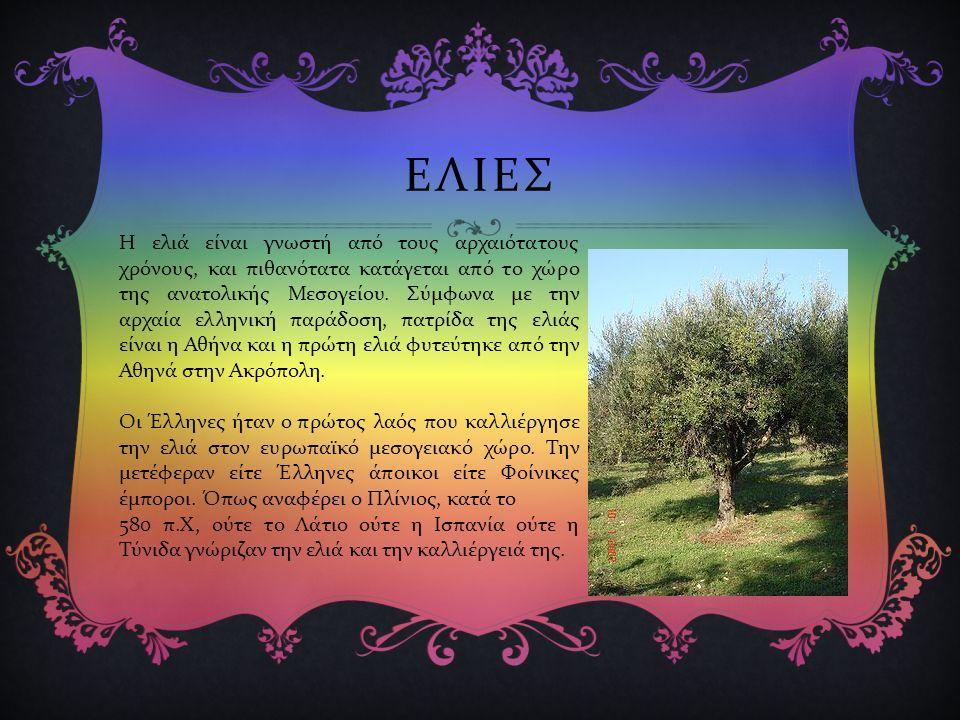 ΕΛΙΕΣ Η ελιά είναι γνωστή από τους αρχαιότατους χρόνους, και πιθανότατα κατάγεται από το χώρο της ανατολικής Μεσογείου.