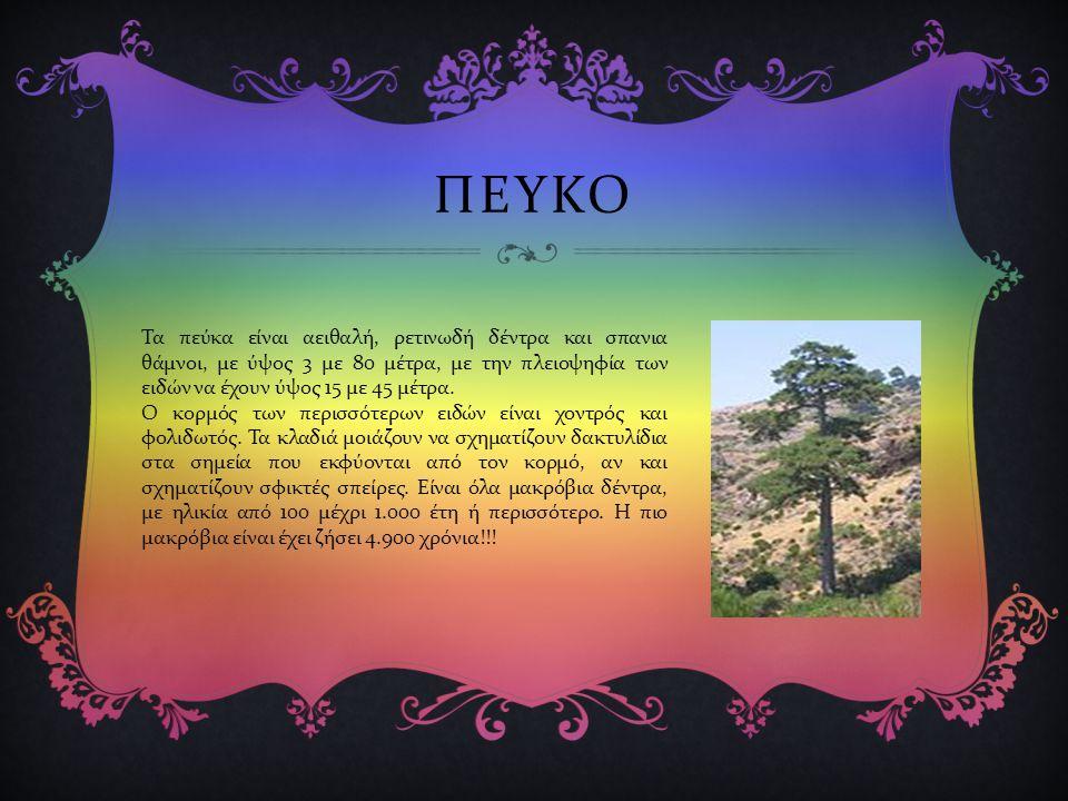 ΠΕΥΚΟ Τα πεύκα είναι αειθαλή, ρετινωδή δέντρα και σπανια θάμνοι, με ύψος 3 με 80 μέτρα, με την πλειοψηφία των ειδών να έχουν ύψος 15 με 45 μέτρα.