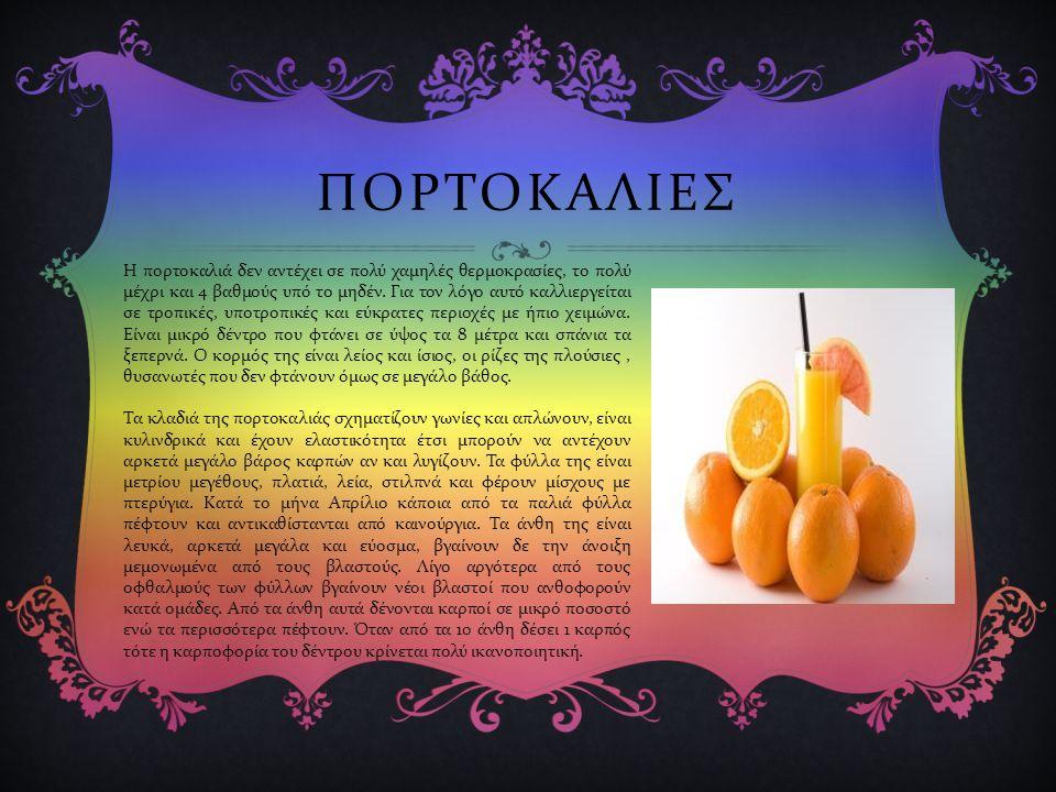 ΠΟΡΤΟΚΑΛΙΕΣ Η πορτοκαλιά δεν αντέχει σε πολύ χαμηλές θερμοκρασίες, το πολύ μέχρι και 4 βαθμούς υπό το μηδέν.