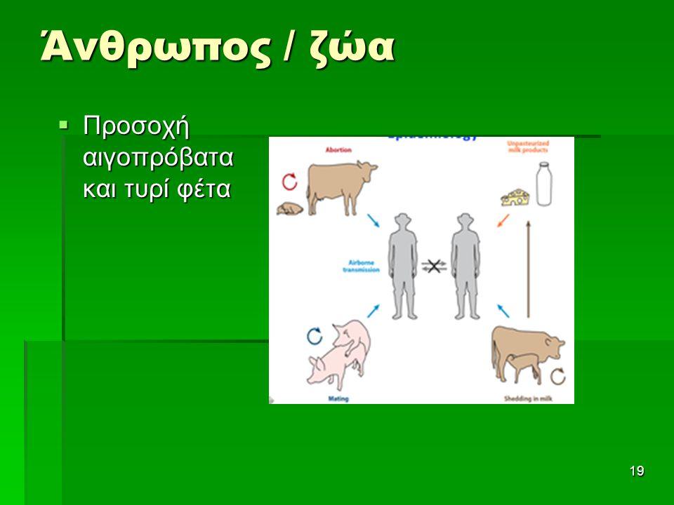 Άνθρωπος / ζώα 19  Προσοχή αιγοπρόβατα και τυρί φέτα