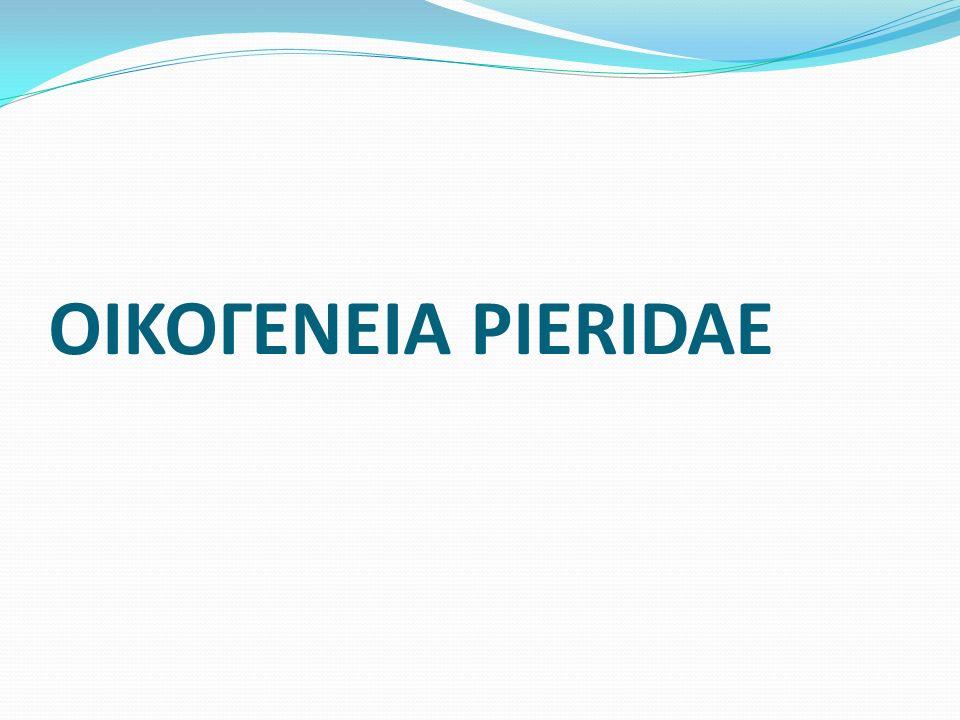 ΟΙΚΟΓΕΝΕΙΑ PIERIDAE