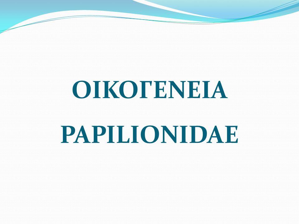ΟΙΚΟΓΕΝΕΙΑ PAPILIONIDAE