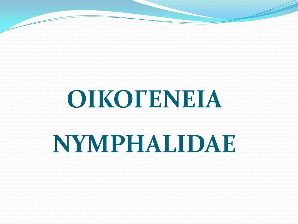 ΟΙΚΟΓΕΝΕΙΑ NYMPHALIDAE