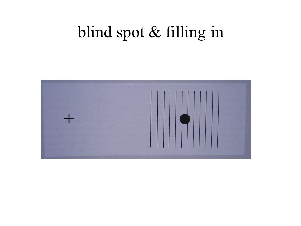 blind spot & filling in