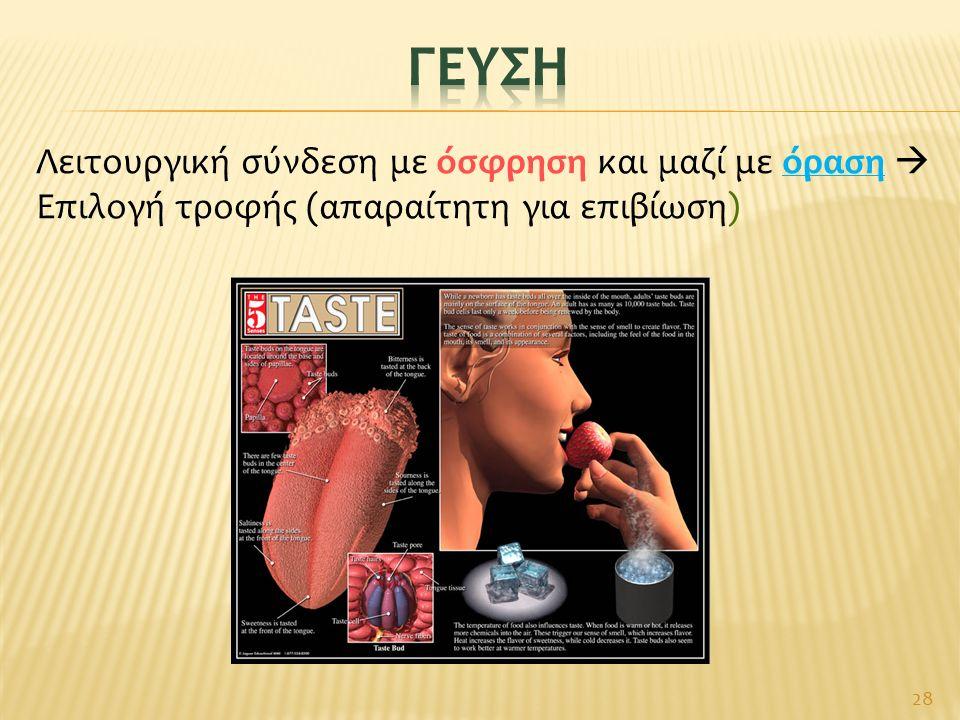 28 Λειτουργική σύνδεση με όσφρηση και μαζί με όραση  Επιλογή τροφής (απαραίτητη για επιβίωση)
