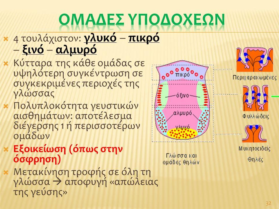  4 τουλάχιστον: γλυκό – πικρό – ξινό – αλμυρό  Κύτταρα της κάθε ομάδας σε υψηλότερη συγκέντρωση σε συγκεκριμένες περιοχές της γλώσσας  Πολυπλοκότητα γευστικών αισθημάτων: αποτέλεσμα διέγερσης 1 ή περισσοτέρων ομάδων  Εξοικείωση (όπως στην όσφρηση)  Μετακίνηση τροφής σε όλη τη γλώσσα  αποφυγή «απώλειας της γεύσης» 32
