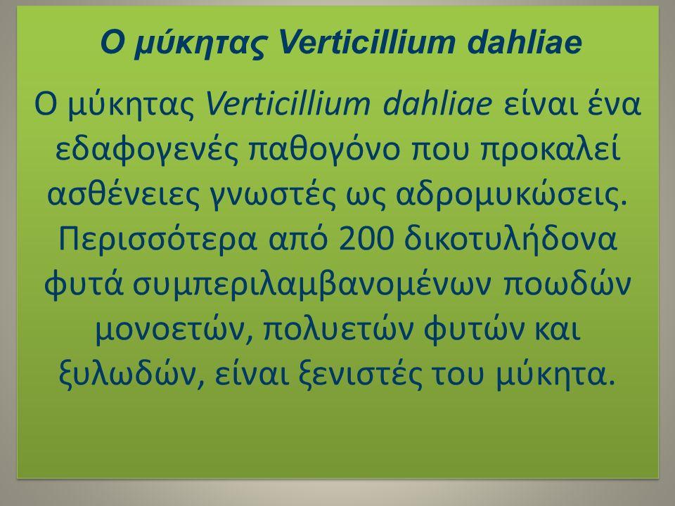 Ο μύκητας Verticillium dahliae είναι ένα εδαφογενές παθογόνο που προκαλεί ασθένειες γνωστές ως αδρομυκώσεις. Περισσότερα από 200 δικοτυλήδονα φυτά συμ