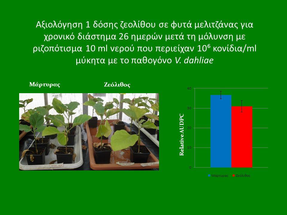 Αξιολόγηση 1 δόσης ζεολίθου σε φυτά μελιτζάνας για χρονικό διάστημα 26 ημερών μετά τη μόλυνση με ριζοπότισμα 10 ml νερού που περιείχαν 10⁶ κονίδια/ml μύκητα με το παθογόνο V.