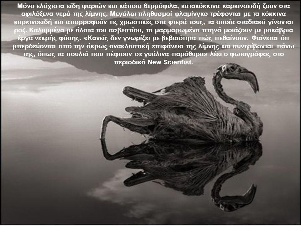 Μόνο ελάχιστα είδη ψαριών και κάποια θερμόφιλα, κατακόκκινα καρκινοειδή ζουν στα αφιλόξενα νερά της λίμνης.