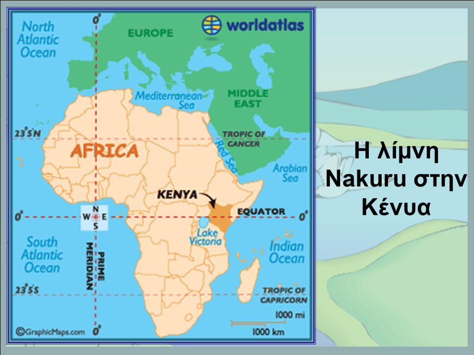 Η λίμνη Nakuru στην Κένυα