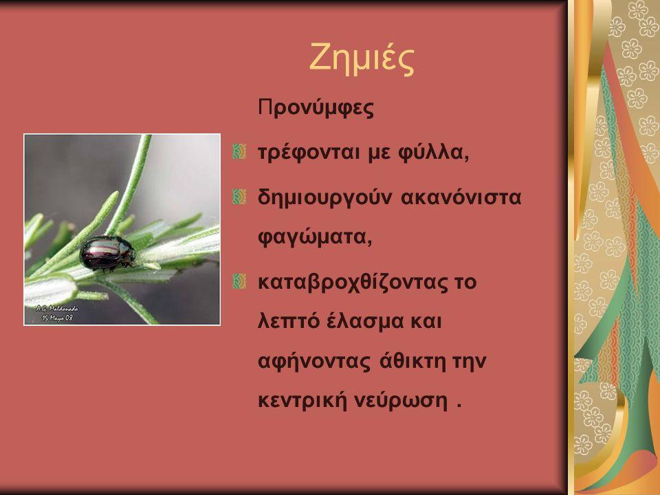 Ζημιές Προνύμφες τρέφονται με φύλλα, δημιουργούν ακανόνιστα φαγώματα, καταβροχθίζοντας το λεπτό έλασμα και αφήνοντας άθικτη την κεντρική νεύρωση.