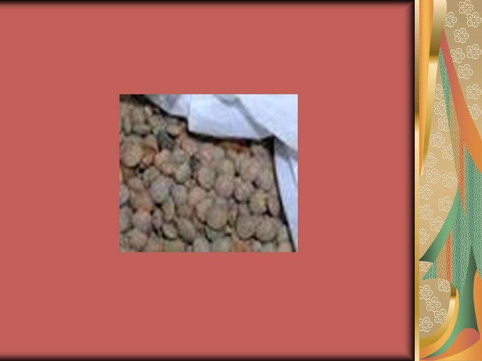 Τα ενήλικα έντομα εναποθέτουν τα αυγά τους κατά προτίμηση πάνω σε καλά αναπτυγμένους σπόρους.